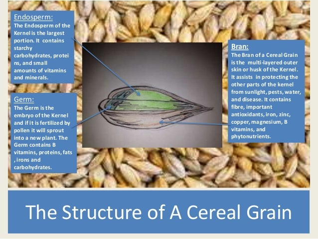 The Structure of A Cereal GrainBran:The Bran of a Cereal Grainis the multi-layered outerskin or husk of the Kernel.It assi...