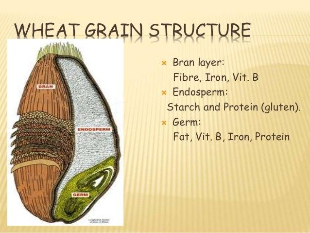 structure of wheat grain pdf