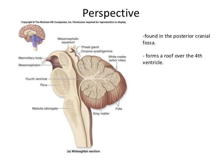 Cerebellum Slide 2