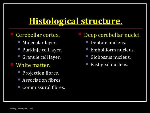 Histological structure.  Cerebellar cortex.  Molecular layer.  Purkinje cell layer.  Granule cell layer.  White matte...