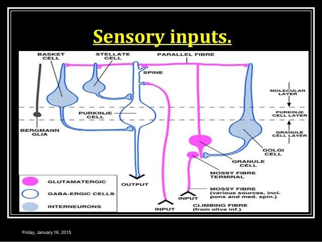 Sensory inputs. Friday, January 16, 2015