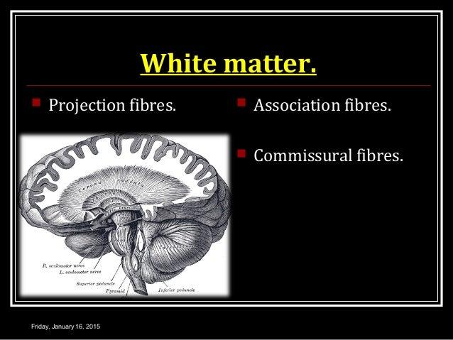 White matter.  Projection fibres.  Association fibres.  Commissural fibres. Friday, January 16, 2015
