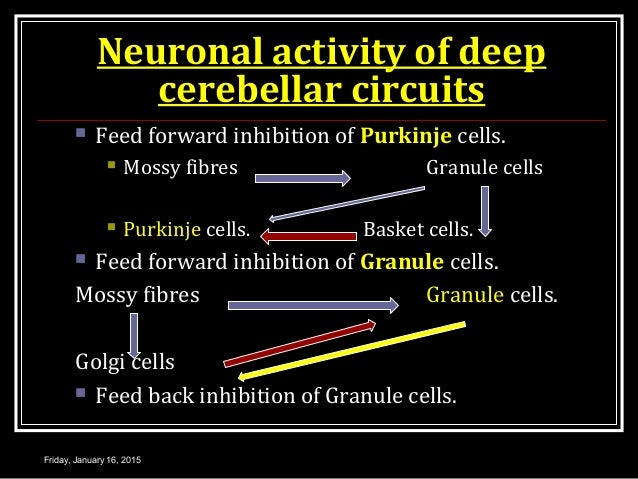 Neuronal activity of deep cerebellar circuits  Feed forward inhibition of Purkinje cells.  Mossy fibres Granule cells  ...