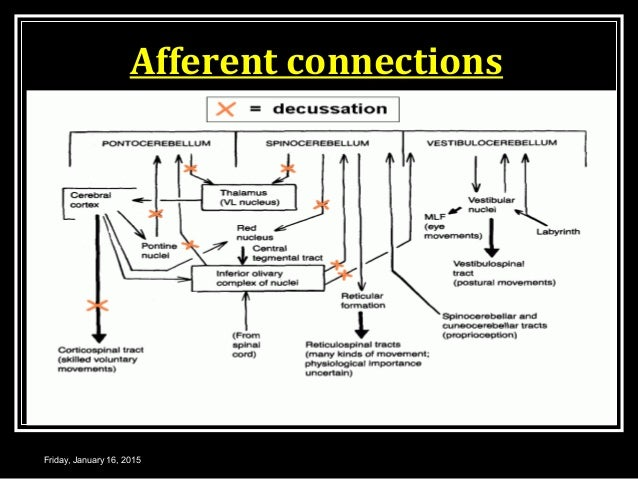 Afferent connections Friday, January 16, 2015