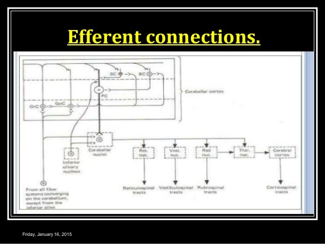Efferent connections. Friday, January 16, 2015