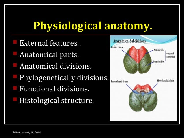 Physiological anatomy.  External features .  Anatomical parts.  Anatomical divisions.  Phylogenetically divisions.  F...