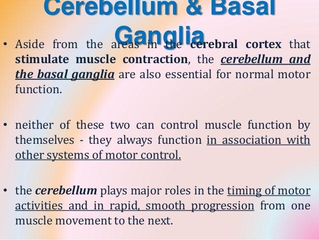 cerebellum, Sphenoid