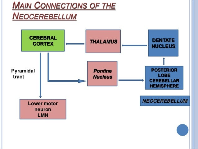  Corticonuclear Connections  A zone ---------- fastigial nucleus  medial vestibular nucleus  B zone ---------- lateral...