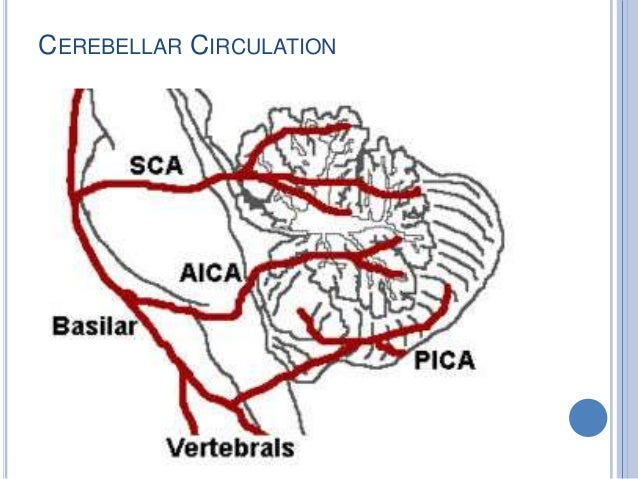 ARCHICEREBELUM  Floculonodular lobe- Vestibulocerebelum  Function:  Maintenance of equilibrium  Suppress Vestibulo Ocu...
