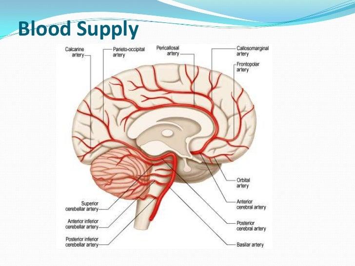  Cerebellar veins arranged in 2 groups- superior & inferior Sup. Cerebellar vein  partly in straight sinus & great cere...
