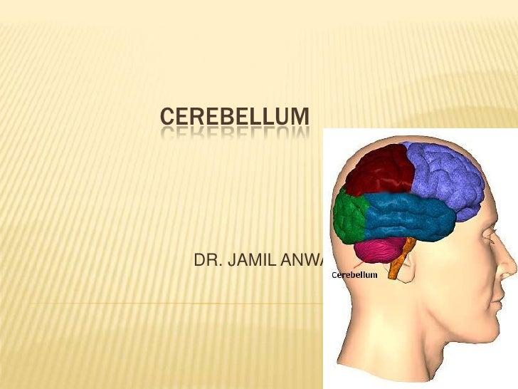 CEREBELLUM  DR. JAMIL ANWAR