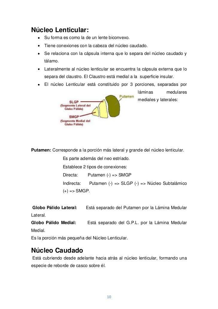 Núcleo Lenticular:       Su forma es como la de un lente biconvexo.       Tiene conexiones con la cabeza del núcleo caudad...