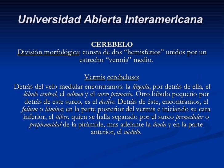 """<ul><li>CEREBELO </li></ul><ul><li>División morfológica : consta de dos """"hemisferios"""" unidos por un estrecho """"vermis"""" medi..."""