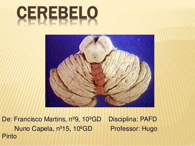 CEREBELO  De: Francisco Martins, nº9, 10ºGD Disciplina: PAFD  Nuno Capela, nº15, 10ºGD Professor: Hugo  Pinto