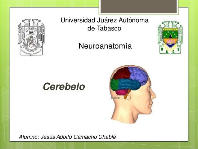 Universidad Juárez Autónoma de Tabasco Neuroanatomía Alumno: Jesús Adolfo Camacho Chablé Cerebelo