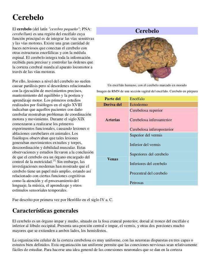 """CerebeloEl cerebelo (del latín """"cerebro pequeño""""; PNA:cerebellum) es una región del encéfalo cuya                         ..."""