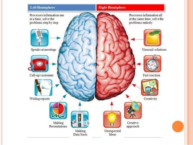 Cerebral cortex - physiology