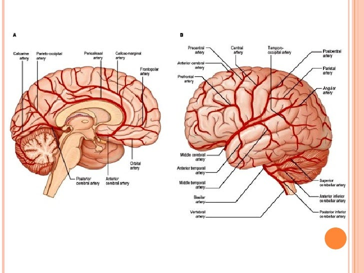 Cerebral circulation by DR.ARSHAD