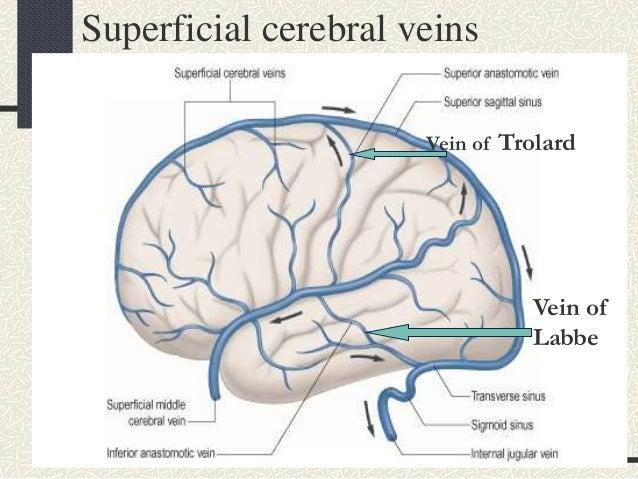 Cerebral veins anatomy