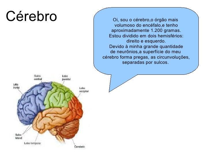 Cérebro Oi, sou o cérebro,o órgão mais  volumoso do encéfalo,e tenho aproximadamente 1.200 gramas. Estou dividido em dois ...