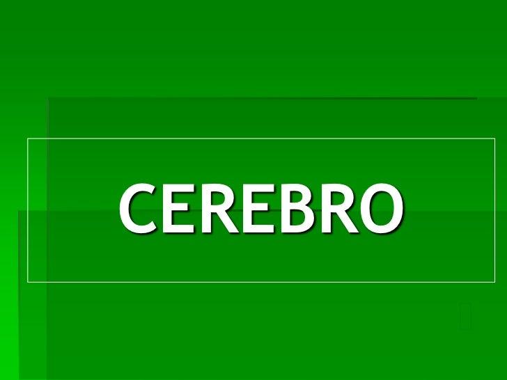 CEREBRO<br />