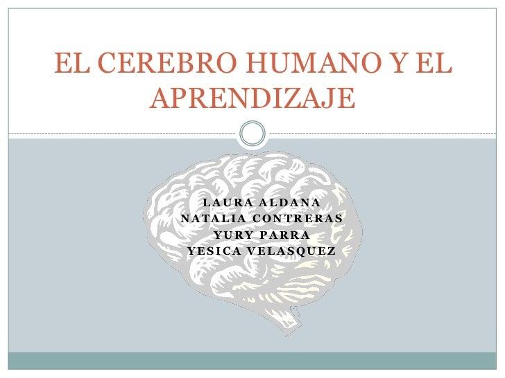 EL CEREBRO HUMANO Y EL      APRENDIZAJE          LAURA ALDANA       NATALIA CONTRERAS           YURY PARRA        YESICA V...