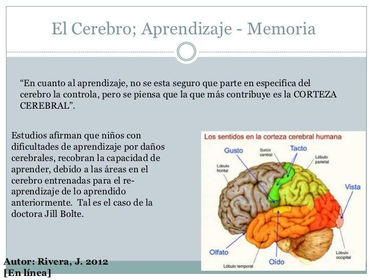 """El Cerebro; Aprendizaje - Memoria   """"En cuanto al aprendizaje, no se esta seguro que parte en especifica del   cerebro la ..."""