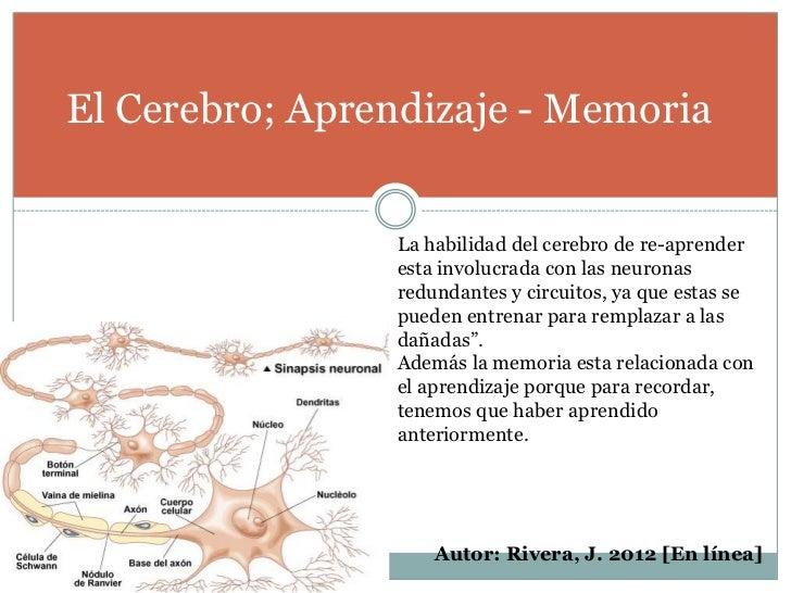 El Cerebro; Aprendizaje - Memoria                La habilidad del cerebro de re-aprender                esta involucrada c...