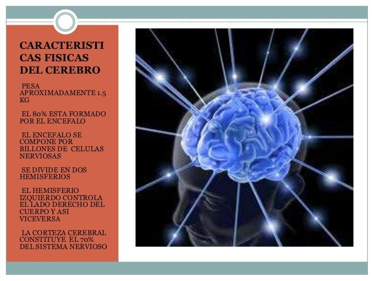 CARACTERISTICAS FISICASDEL CEREBROPESA•APROXIMADAMENTE 1.5KG•EL 80% ESTA FORMADOPOR EL ENCEFALO•EL ENCEFALO SECOMPONE PORB...
