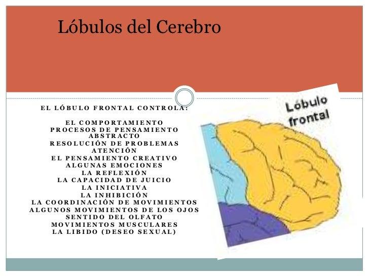 Lóbulos del Cerebro EL LÓBULO FRONTAL CONTROLA:       EL COMPORTAMIENTO    PROCESOS DE PENSAMIENTO            ABSTRACTO   ...