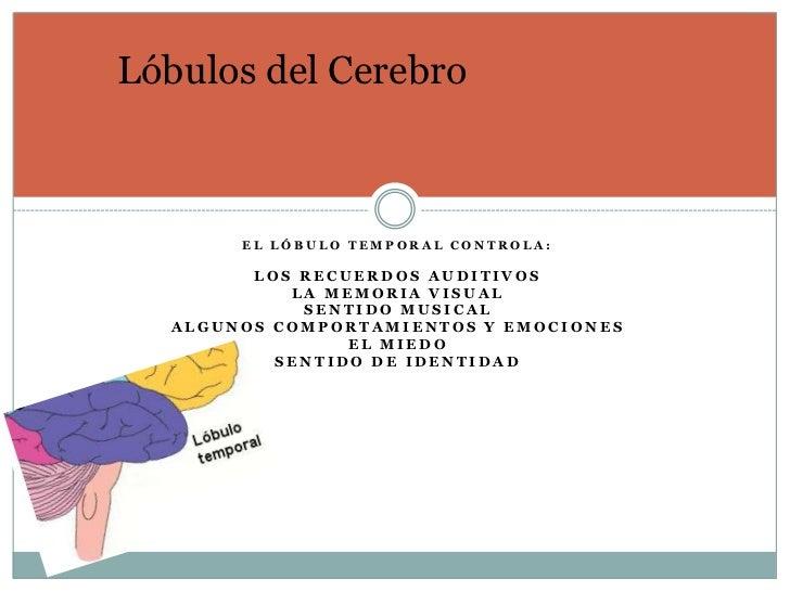 Lóbulos del Cerebro       EL LÓBULO TEMPORAL CONTROLA:        LOS RECUERDOS AUDITIVOS           LA MEMORIA VISUAL         ...