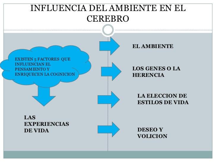 INFLUENCIA DEL AMBIENTE EN EL               CEREBRO                          EL AMBIENTEEXISTEN 5 FACTORES QUEINFLUENCIAN ...
