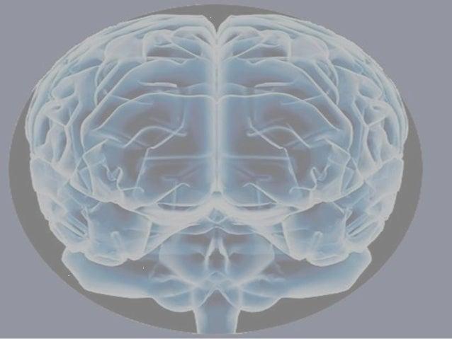 Procesa información sensorial, controla y                                                       coordina: movimiento, comp...