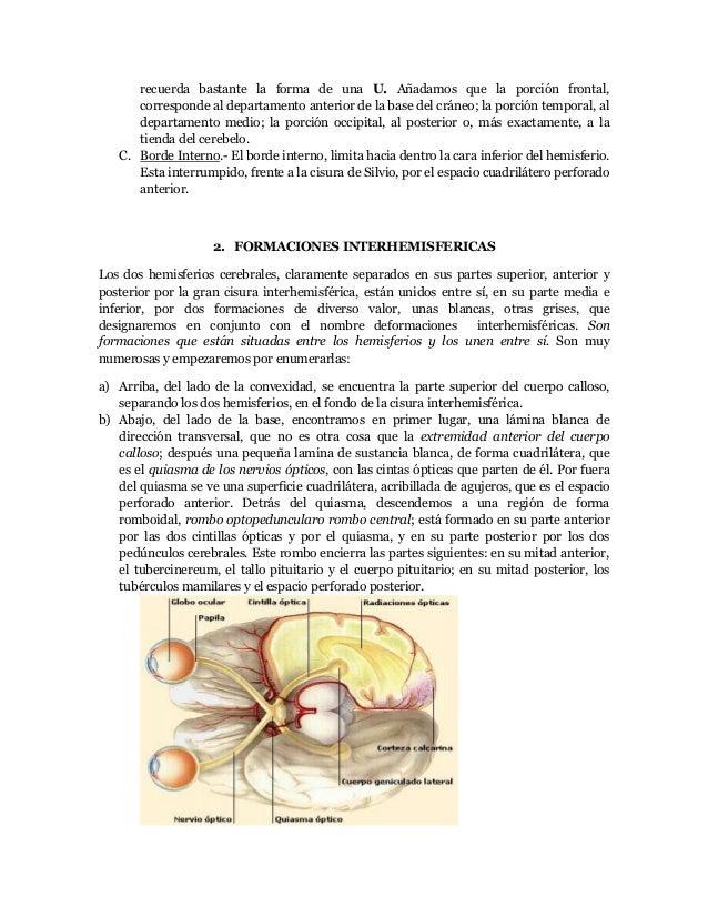 Cerebro, Cerebelo, Protuberancia Anular, Bulbo Raquideo