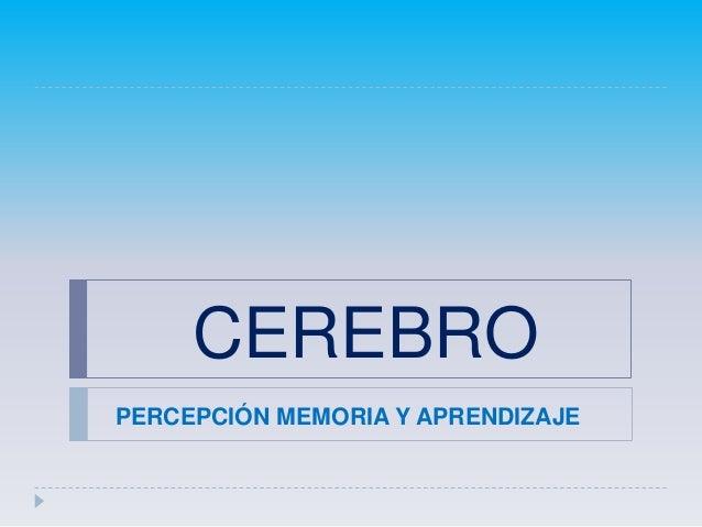 CEREBROPERCEPCIÓN MEMORIA Y APRENDIZAJE