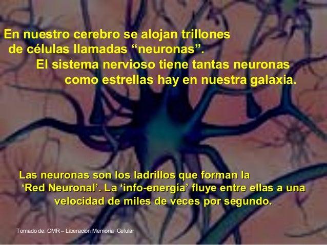 Resultado de imagen de Los ladrillos del cerebro