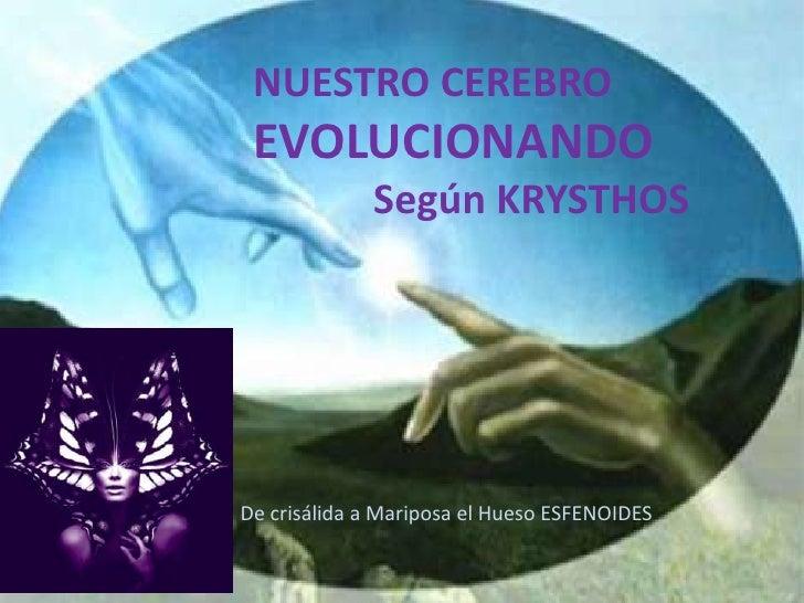 NUESTRO CEREBRO EVOLUCIONANDO             Según KRYSTHOSDe crisálida a Mariposa el Hueso ESFENOIDES
