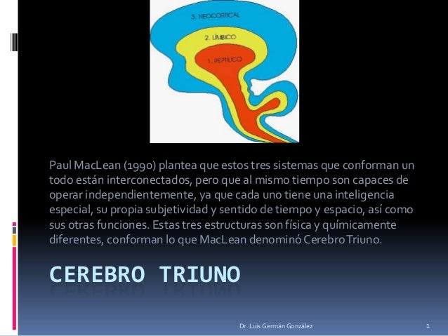 CEREBRO TRIUNOPaul MacLean (1990) plantea que estos tres sistemas que conforman untodo están interconectados, pero que al ...