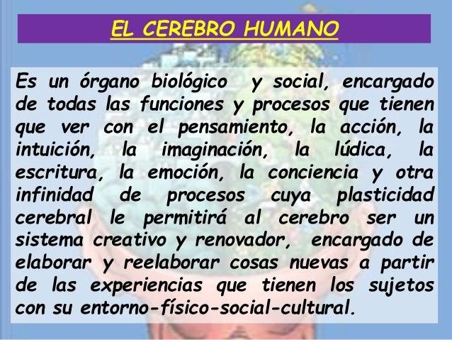Es un órgano biológico y social, encargado de todas las funciones y procesos que tienen que ver con el pensamiento, la acc...
