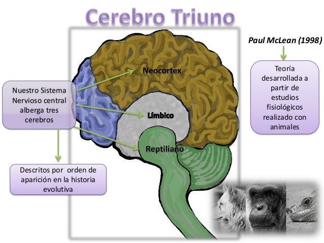 El Costurero De Isis : Cerebro Flexible Antagónico de Cerebro Duro