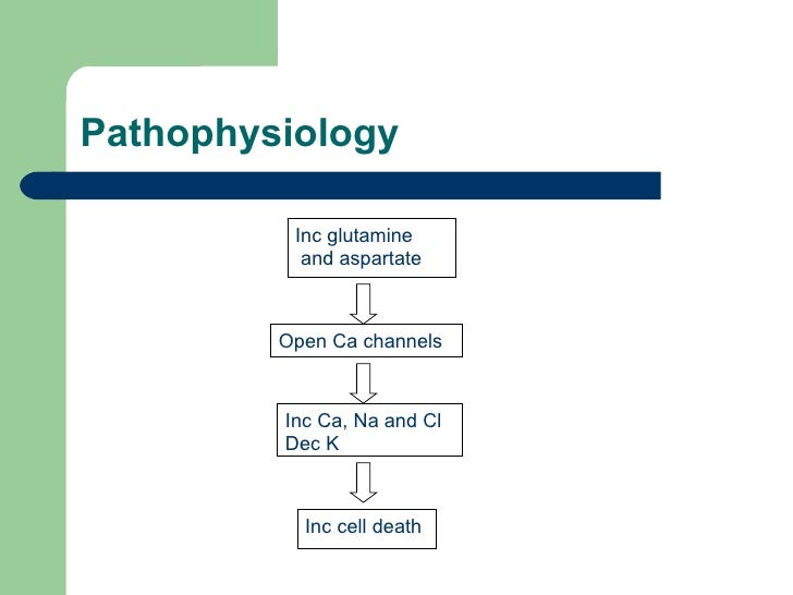 Pathophysiology Open Ca channels Inc Ca, Na and Cl  Dec K Inc cell death Inc glutamine  and aspartate