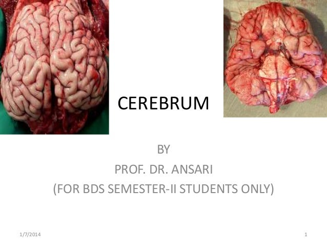 CEREBRUM BY PROF. DR. ANSARI (FOR BDS SEMESTER-II STUDENTS ONLY)  1/7/2014  1