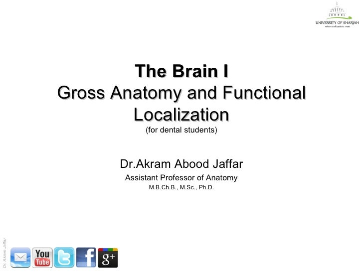 The Brain I                   Gross Anatomy and Functional                           Localization                         ...
