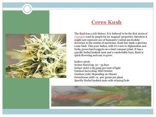 Ceres Seeds Online   Cup Winner Seeds   Ceres Marijuana Seeds
