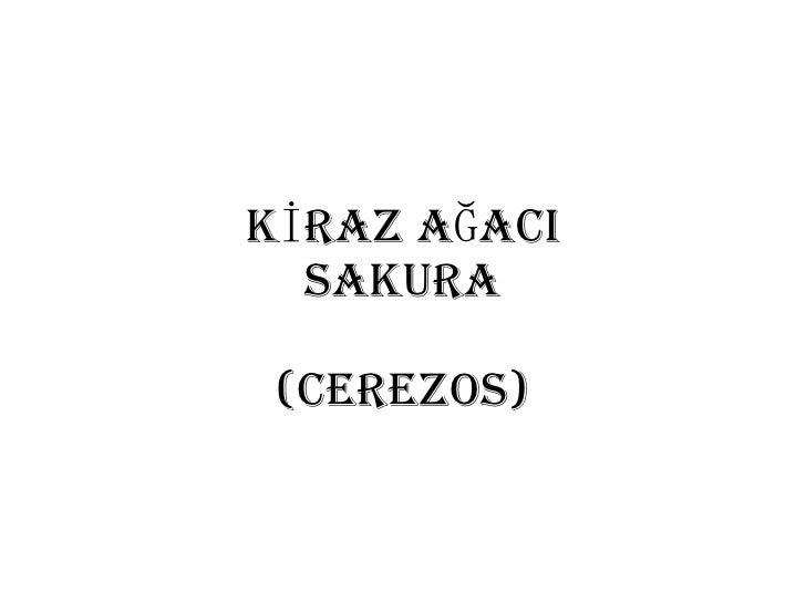 KİRAZ AĞACI SAKURA (Cerezos)
