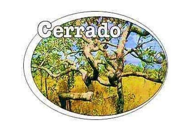 Breve histórico • O Cerrado é praticamente um bioma brasileiro, apesar de que há manchas de Cerrado na Bolívia e Paraguai,...