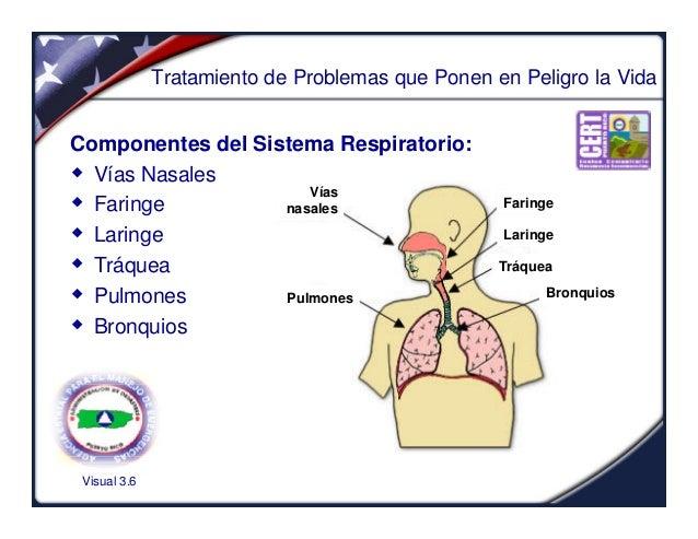 Visual 3.6Tratamiento de Problemas que Ponen en Peligro la VidaComponentes del Sistema Respiratorio:w Vías Nasalesw Faring...