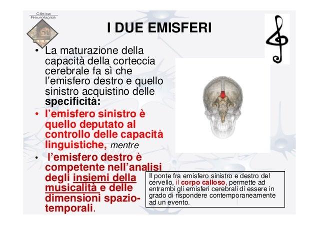 cervello destro risalente cervello sinistro