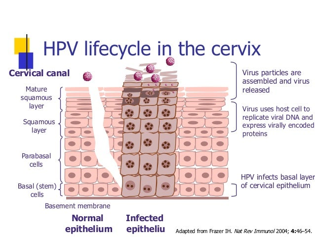 how to live healthy with hpv