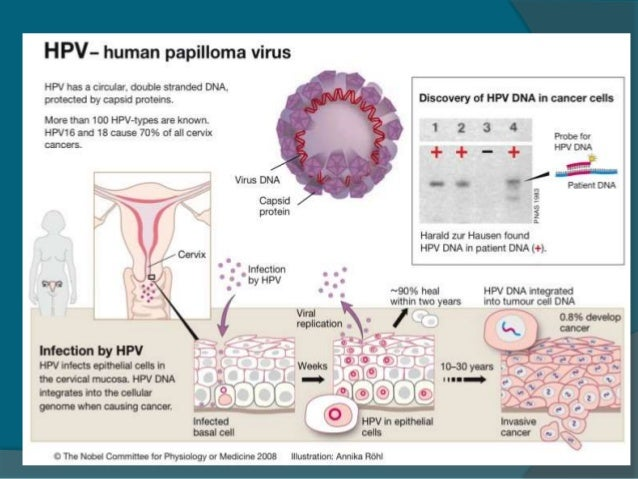 the screening of cervical cancer Further, in a recent audit of the uk national cervical cancer screening  much  confusion over the involvement of hpv in cervical cancer has arisen from early.